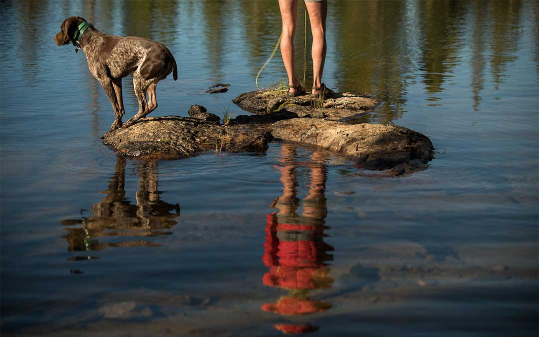 A dog watches as her owner fishes